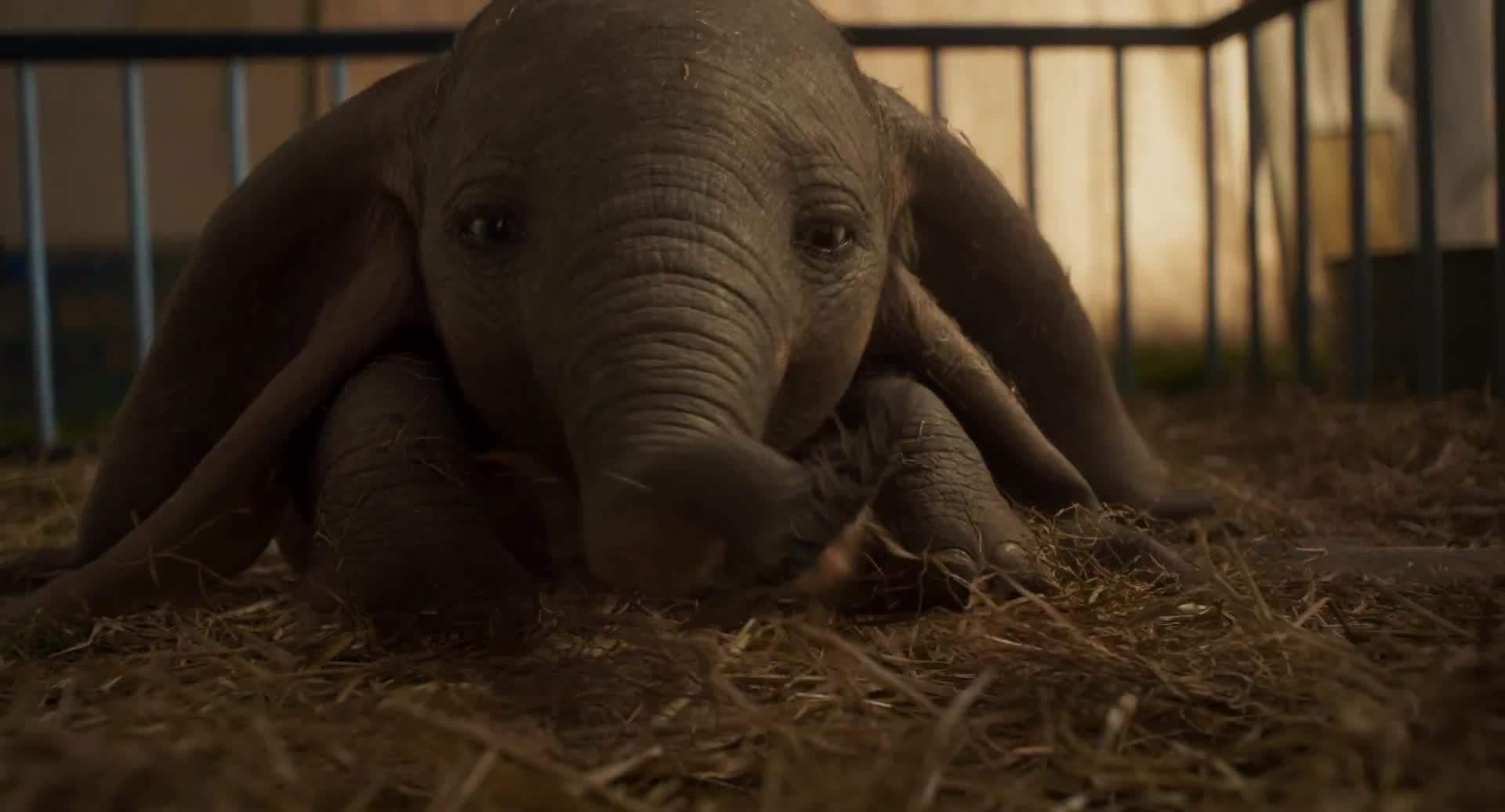 Dumbo (2019) - IMDb