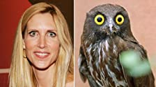 Ann Coulter and Susanne Atanus Are Both Crazy - Ex Drug Deal Speaks Out About Pan