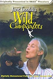 Jane Goodall's Wild Chimpanzees Poster