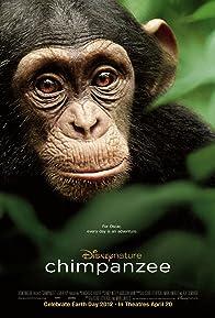 Primary photo for Chimpanzee