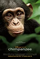 among the wild chimpanzees questions