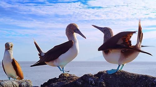 Galapagos 3D: Nature's Wonderland   Official Trailer