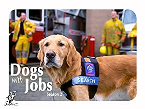 Where to stream Dogs with Jobs