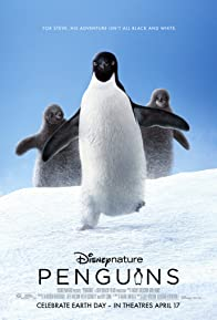 Primary photo for Penguins
