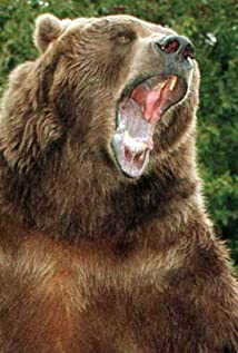 Bart the Bear Picture
