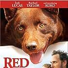 Josh Lucas, Rachael Taylor, and Koko in Red Dog (2011)