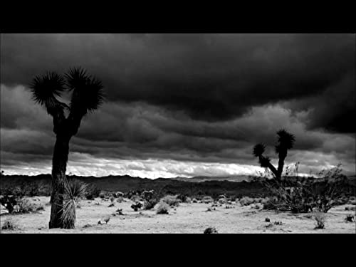 JOSHUA TREE, 1951 - a film by Matthew Mishory - Teaser