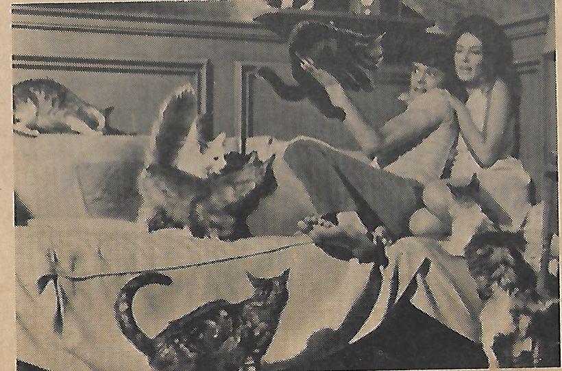 Gayle Hunnicutt, Michael Sarrazin, and Tullia in Eye of the Cat (1969)