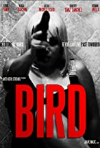 Primary image for Bird