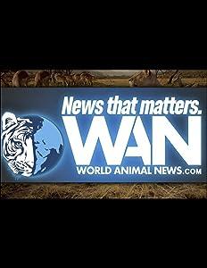 New movie watchers Marine Mammal Center Laguna Beach by none [360p]