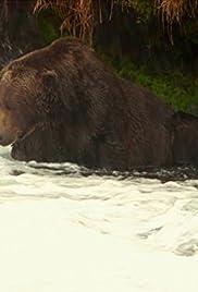 Bears! Poster