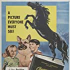 Courage of Black Beauty (1957)