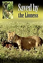 Saved by the Lioness