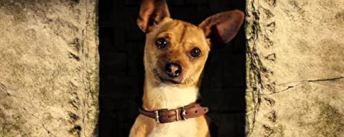 Beverly Hills Chihuahua: Theatrical Trailer