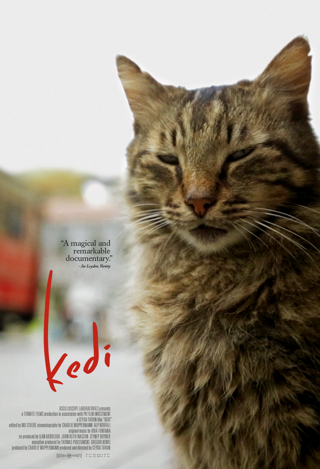 Kedi (2016) BluRay 480p & 720p