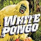 White Pongo (1945)