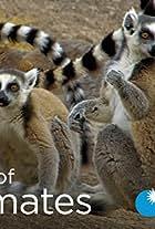 Land of Primates
