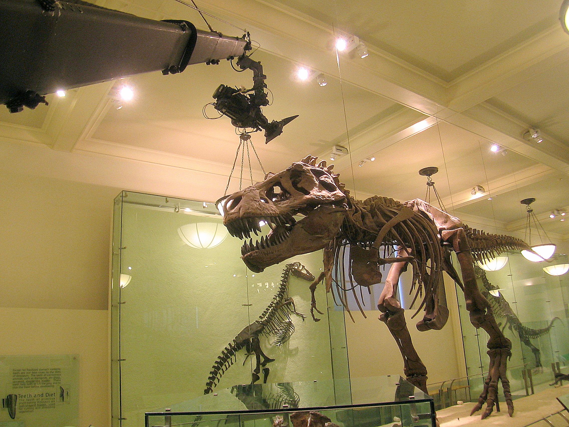 New York Jib, jimmy jib at Museum of Natural History, NYC
