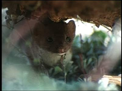 Downloadable movies dvd Weasels: Sleek and Savage - Part 1 by [h264]