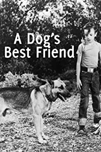 A Dog's Best Friend USA