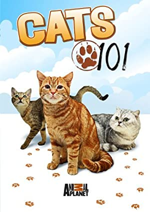 Where to stream Cats 101
