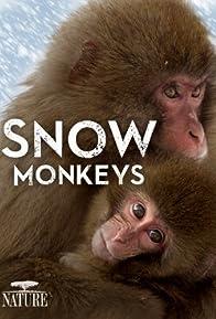 Primary photo for Snow Monkeys