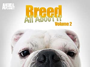 Where to stream Breed All About It