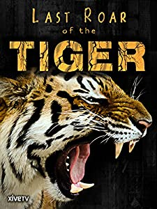 Conflict Tiger by