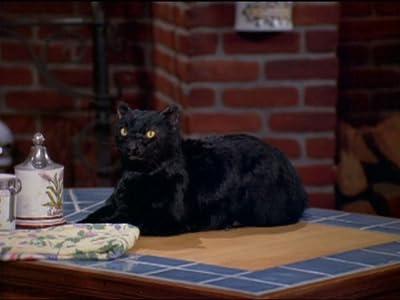 Descargas de películas en sitios gratuitos. Sabrina, the Teenage Witch: Trial by Fury USA  [avi] [flv] [480x640]