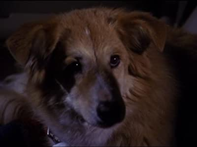 italian movie watching All Dogs Go to Heaven by [Mp4]