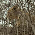 Secrets of Wild India (2012)