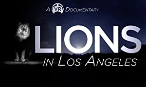 Lions in Los Angeles