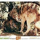 The Legend of Lobo (1962)