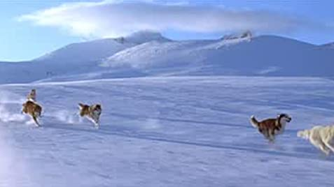 Eight Below (2006) - IMDb