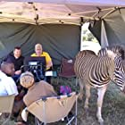 A zebra visits the director's tent on the set of Against The Wild: Survive The Serengeti.  May 2015, South Africa.
