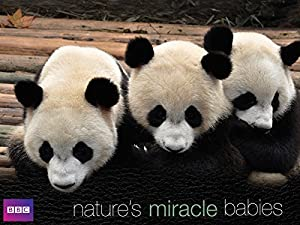 Natures Miracle Babies