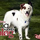 Dog with a Blog (2012)