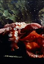 Primary image for Oklahoma Octopus