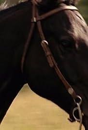Heartland gift horse tv episode 2008 imdb gift horse poster negle Images