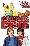 Hatching Pete (2009)