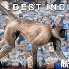 Wildest India (2012)
