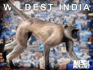 Where to stream Wildest India
