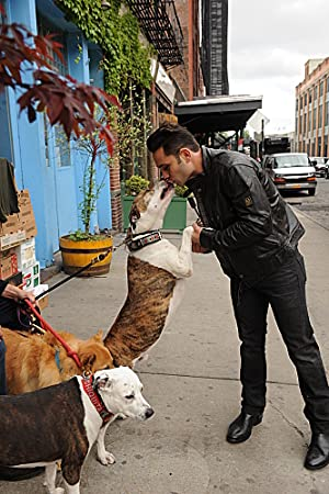 Where to stream Dogs in the City