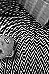 David Lynch's New Short Film 'Alan R' Has a Heartfelt Connection to 'Eraserhead' — Watch
