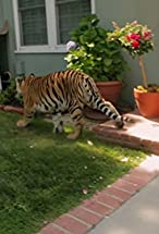 Primary image for Tiger in My Backyard