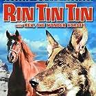 Rin Tin Tin Jr.