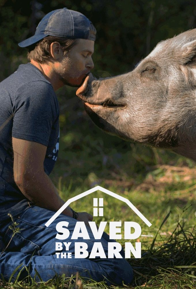 Saved By The Barn – Season 1 Episode 9 – Hungarian Hogs
