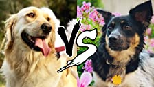 Who Can Teach Their Dog a Trick the Fastest?