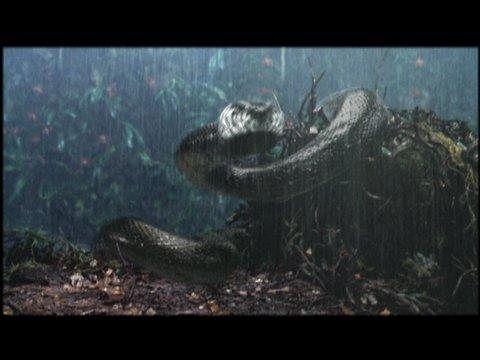 Anaconda - Sentiero di sangue full movie hd 1080p download kickass movie