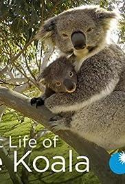 Secret Life of the Koala Poster